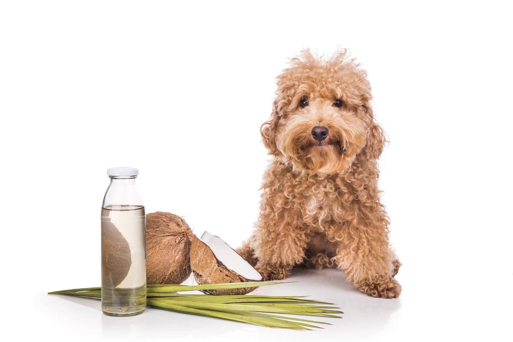 Coconut oil and fats natural ticks fleas repellent for pets