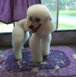 Doggie style pet grooming