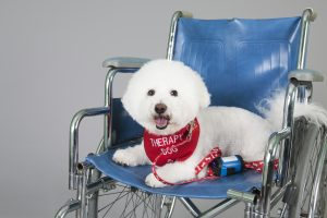The Differences Between Therapy Dogs, Service Dogs and Emotional Support Dogs