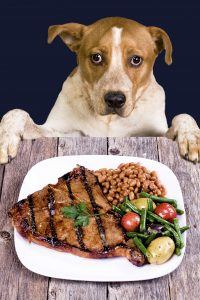 How To Keep Your Dog From Begging For Food