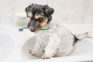 Cleaning your dog's teeth is not always easy. Here are some ideas.