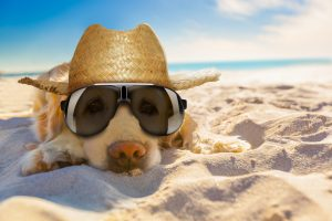 Here are five tips to keep your dog from overheating.