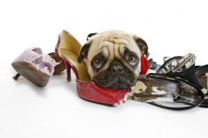 How to Stop Your Dog from Chewing