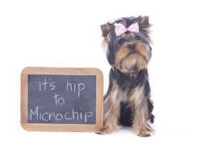 what is microchipping?