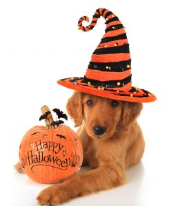 Five Easy Halloween Costume Ideas for Dogs