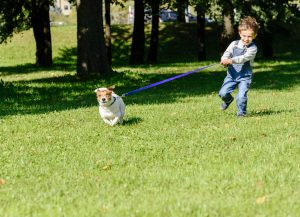 5 Tips to Stop Your Dog from Pulling