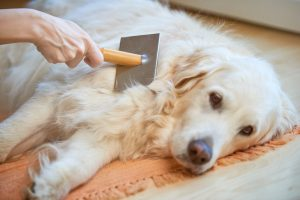 How to Reduce Excessive Shedding