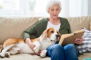5 Reason to Adopt an Older Dog
