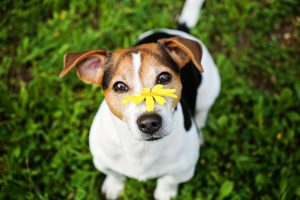 allergies in your dog are treatable.