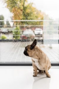 Here are some ideas for rainy day, indoor exercises for your dog.