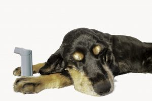 Does My Pet Have Asthma?