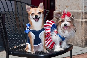 Fourth of July with Your Dog