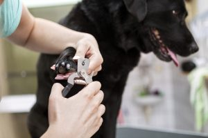 Maintaining Your Dog's Nails
