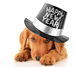 New Year's and Pets