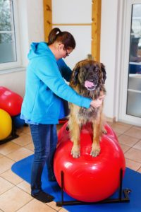 physical therapy for your pet