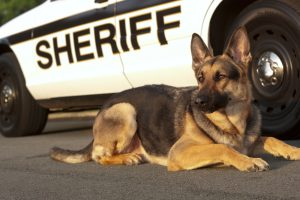 Learn more about German shepherd dogs here.