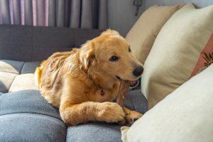 Alternatives to Rawhide Dog Chews
