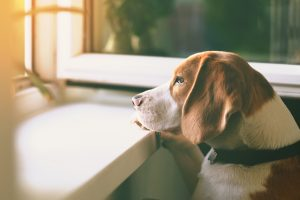 As you slowly become more active out of the home, your pet can suffer from separation anxiety.